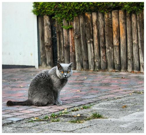 ... #kot #zwierzęta