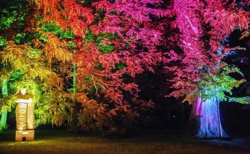 drzewa w kolorowych światłach.