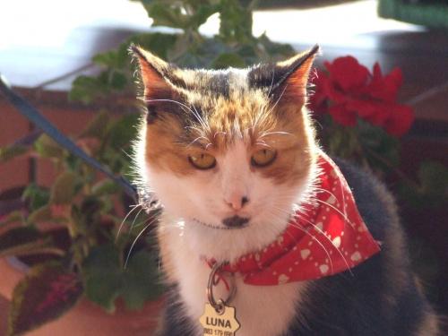 Lu #kot #koty #kwiatki #lilie