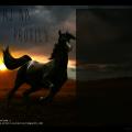 :D #Koń