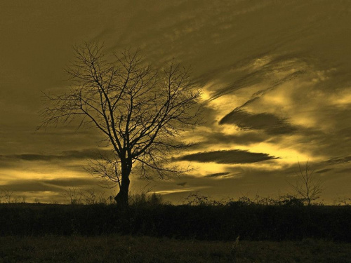 #drzewo #sepia