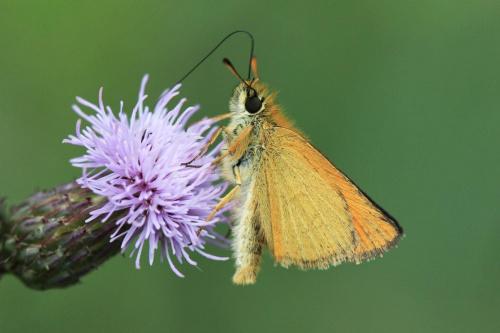 mała jest piękne #kwiat #makro #motyl #przyroda
