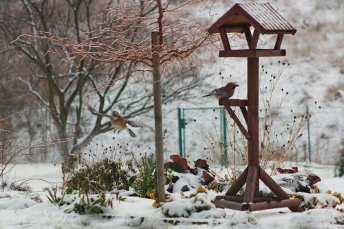 Para sójek jadła dziś z nami śniadanie :) #ptakim #zima #sójka