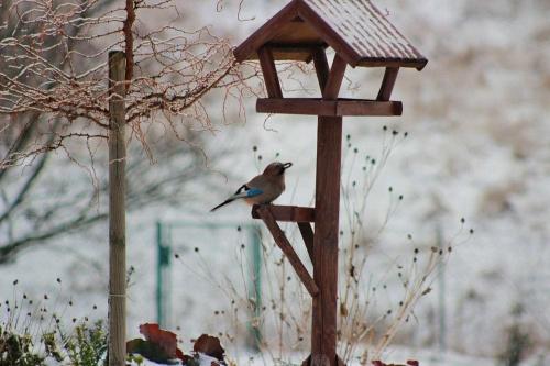 #zima #ptaki