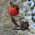 #róża #czerwony
