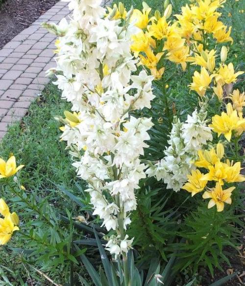 kwiaty #kwiat #biel #zieleń #żółty #ogrody