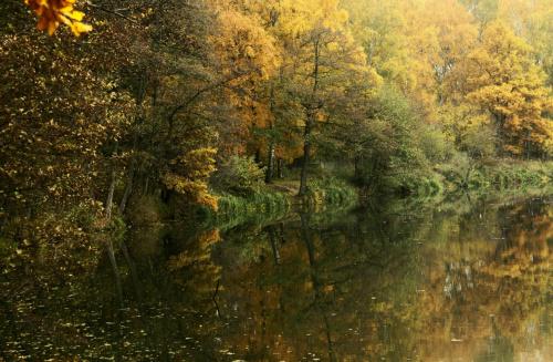 jesienny spacer #jesień #jezioro #las #pejzaże #przyroda #widoki