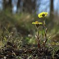 las i wiosna #wiosna #fotmart #fotosik #dzikapolska #WMoimObiektywie #las #ropucha #kwiaty