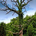 nowe życie... #drzewo