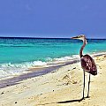 Plażowicz, Ukulhas Island #ptak #plaża