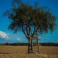 #drzewo #pola #przyroda #niebo #natura